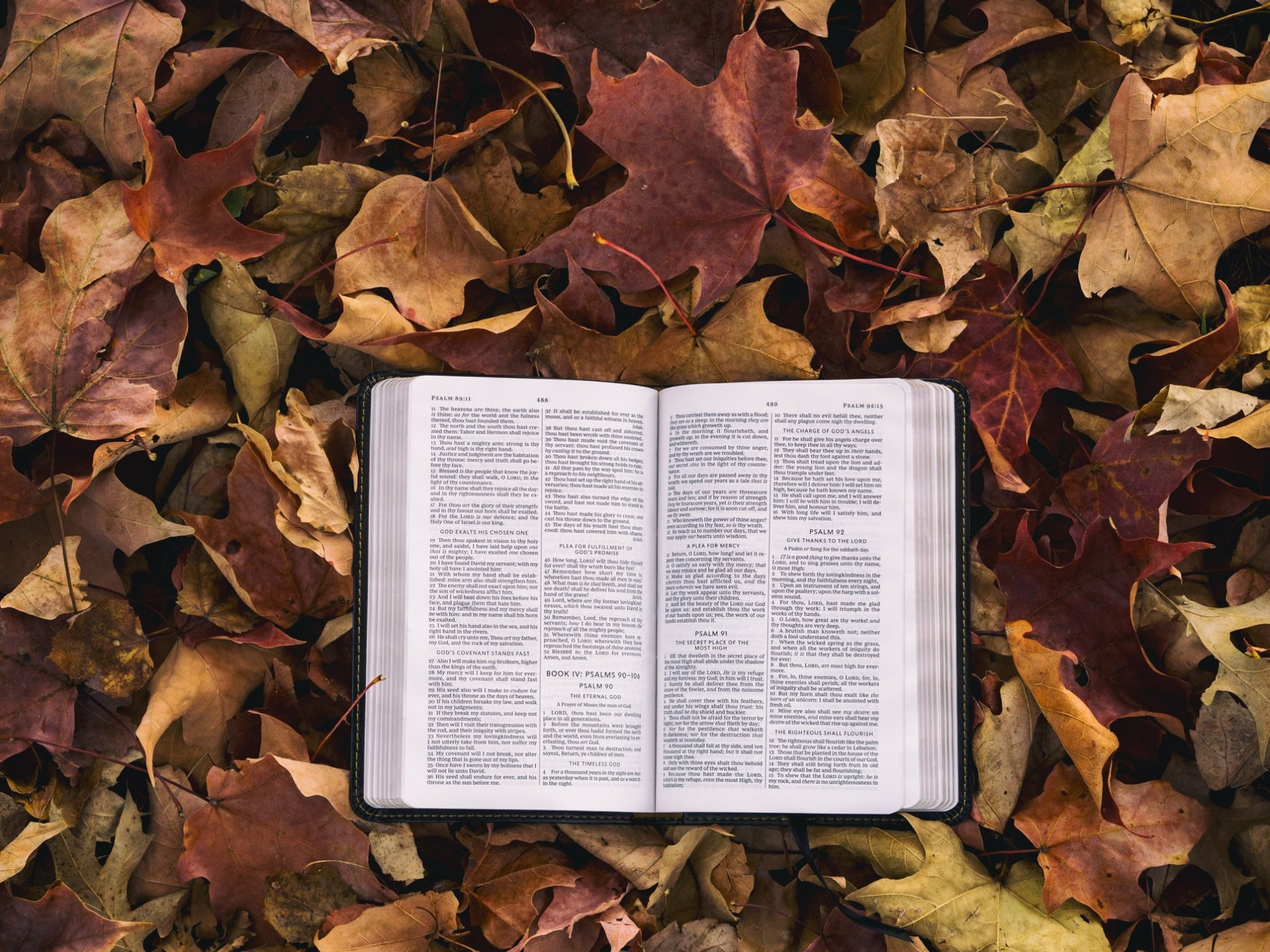 book_on_leaves